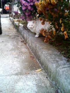 花壇からこんにちわ。